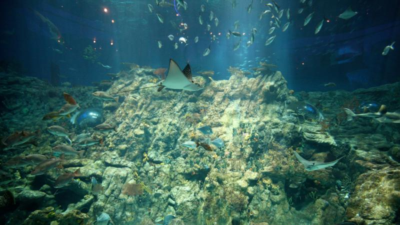 Hong Kong Ocean Park Grand Aquarium